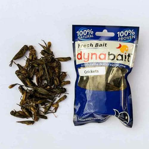 Dynabait  fresh crickets fishing bait can be used for catching any freshwater fish