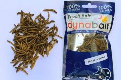 mealworms for trout